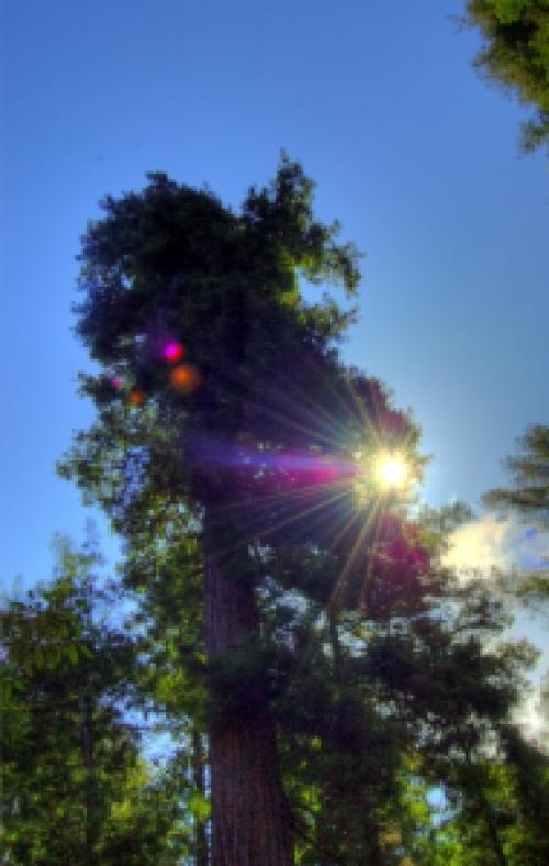 Redwood_2_hdr