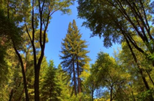 Redwood_3_hdr